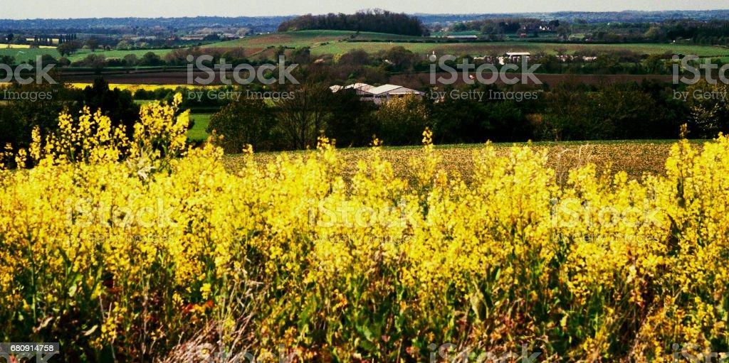 warwickshire farmland shot on 35mm colour film royalty-free stock photo