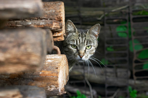 wary cat stock photo