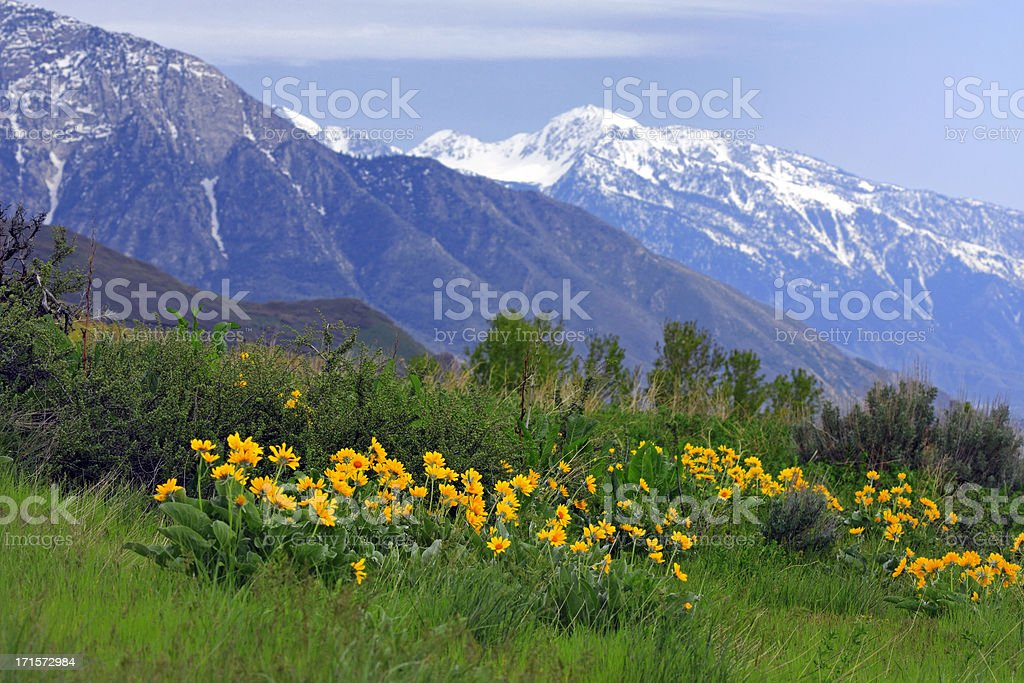 Wasatch Mountains in Spring stock photo