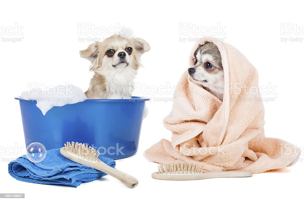 Wash the dogs stock photo