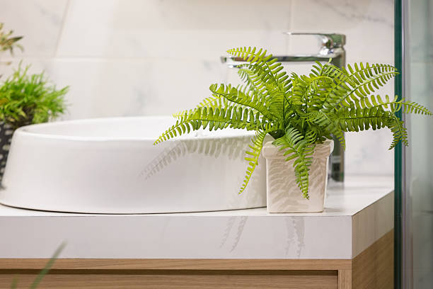 Washbasin counter Green leaf ferns decorated on top of washbasin counter in a modern bathroom. bathroom plant stock pictures, royalty-free photos & images