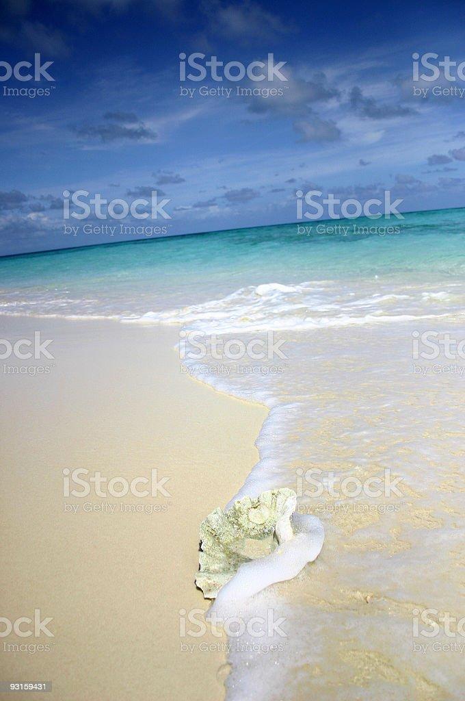 Washed Ashore 2 stock photo