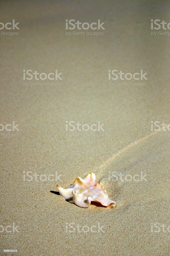 Washed Ashore stock photo