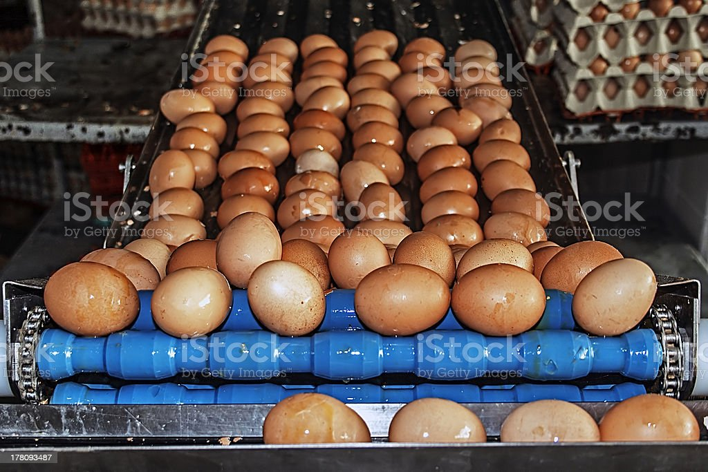 Washed eggs on a blue line industrial stock photo