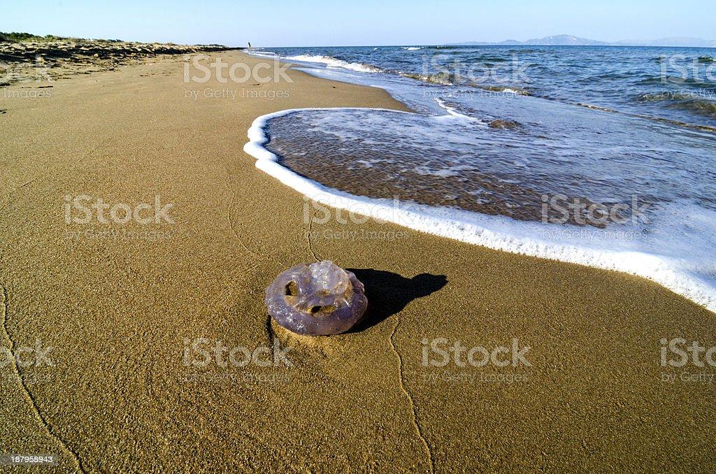 Washed up jellyfish stock photo