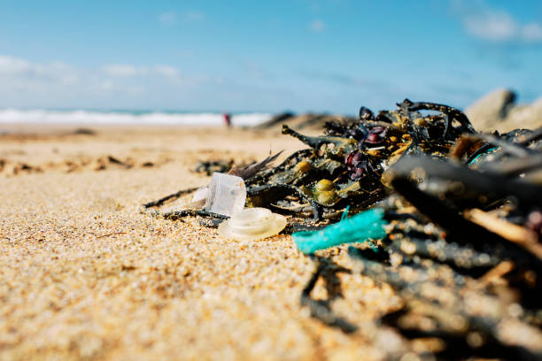 washed up pieces of plastic mixed with seaweed after a storm high tide at fistral beach, newquay, cornwall. - trash stock pictures, royalty-free photos & images
