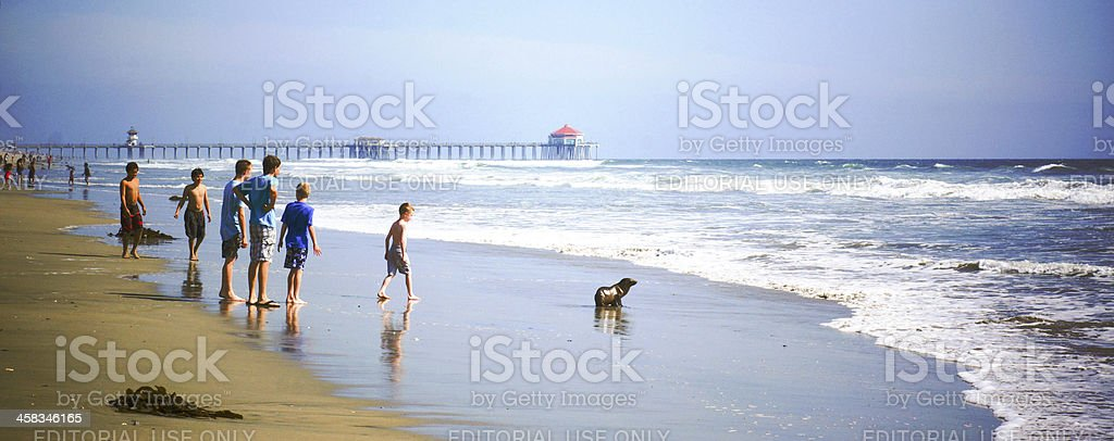 Washed-Up Baby Seal royalty-free stock photo