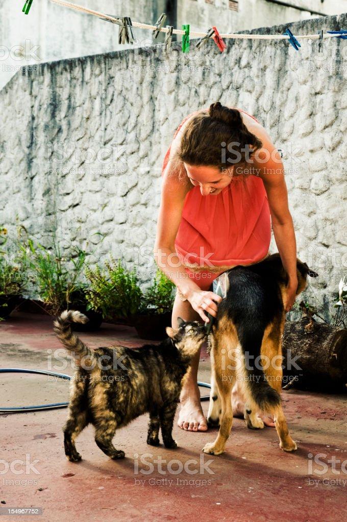 washing dog stock photo