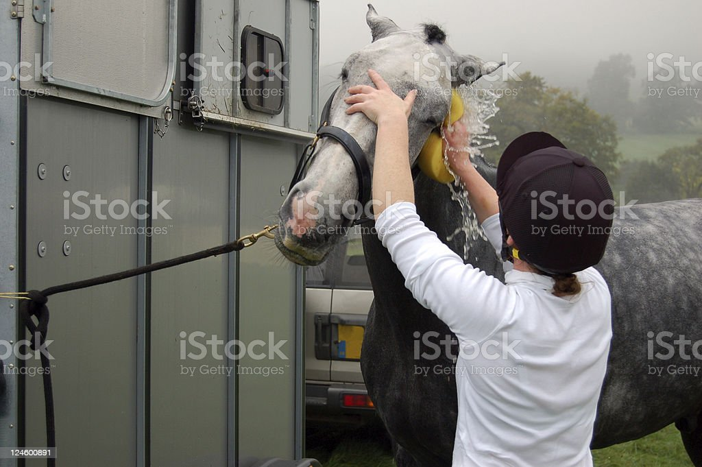 Washing Horse down with sponge royalty-free stock photo