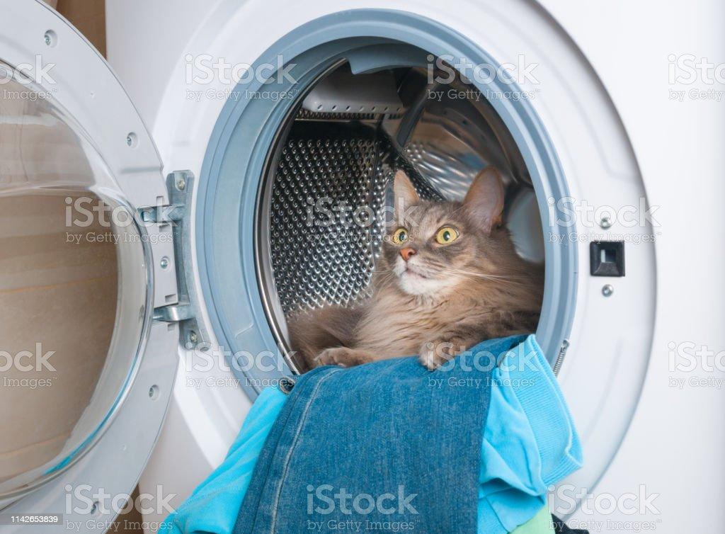 Washing machine and furry gray cat inside