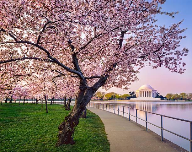 Washington DC cherry trees, footpath, Tidal Basin lake, Jefferson Memorial stock photo