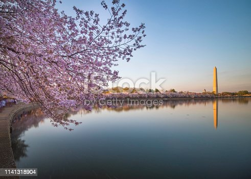 Washington DC, Cherry Blossom, Potomac River, Famous Place, Dusk