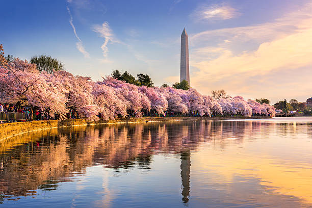 washington dc in spring - monument bildbanksfoton och bilder