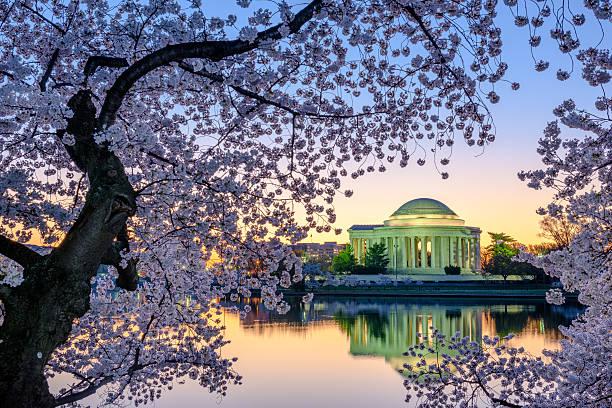 Un printemps à Washington, D.C. - Photo
