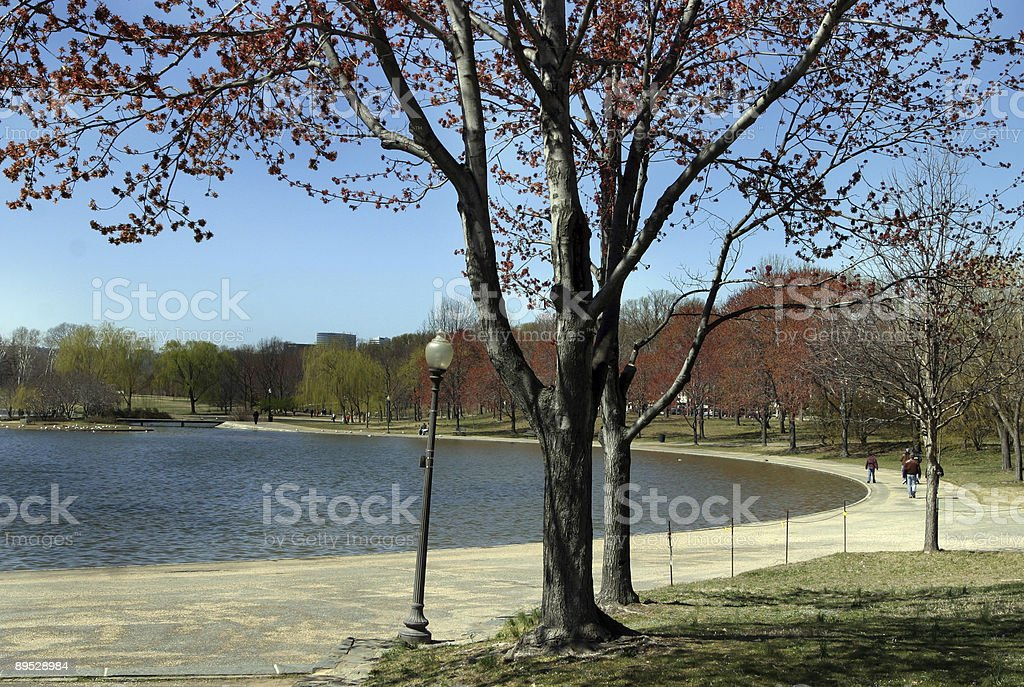 Bacino di marea di Washington DC foto stock royalty-free