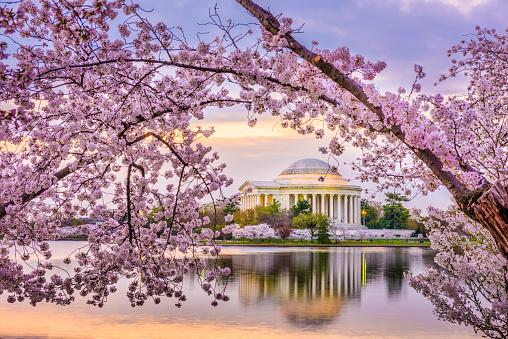 Washington DC, USA at the Jefferson Memorial