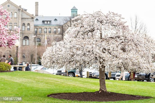 825525754istockphoto Washington DC, USA college church campus, hall building in capital city, cherry blossom white flowers spring season tree 1081677768