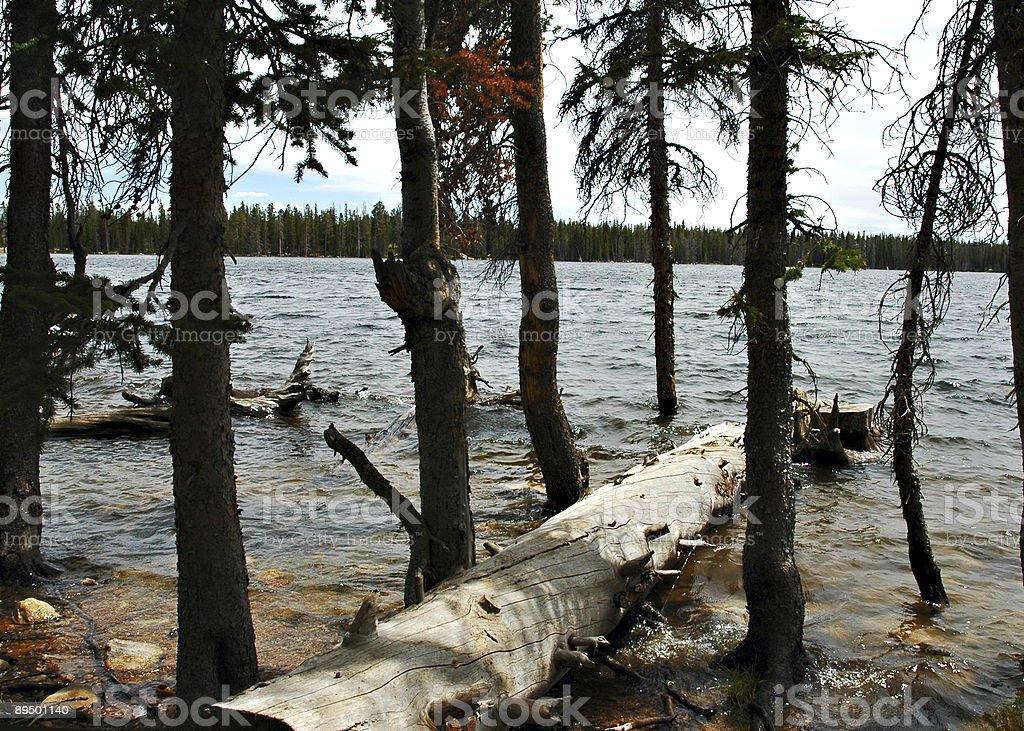 Waszyngton Jezioro zbiór zdjęć royalty-free