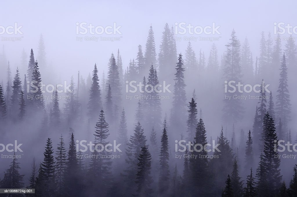 USA, Washington, Pierce County, Mount Rainier National Park, Cascade Range, Mist in  forest royalty-free stock photo