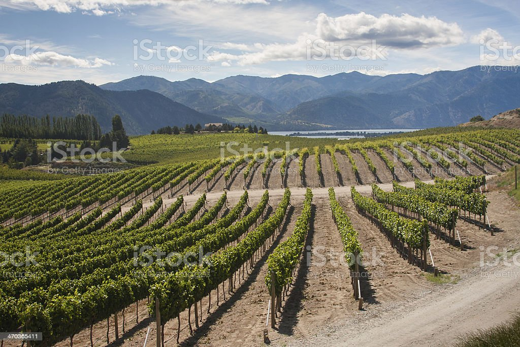 Washington Vineyard Vista stock photo