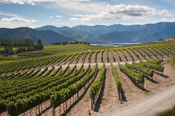 Washington Vineyard Vista Chelan, Washington Vineyard washington state stock pictures, royalty-free photos & images