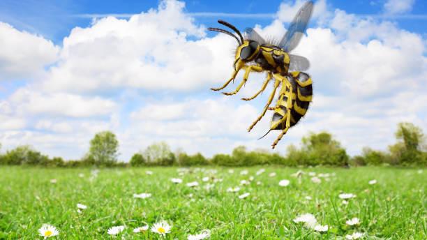 Wasp-Angriff-Seitenansicht – Foto