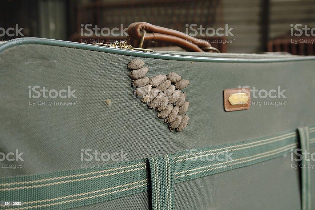 wasp babies stock photo