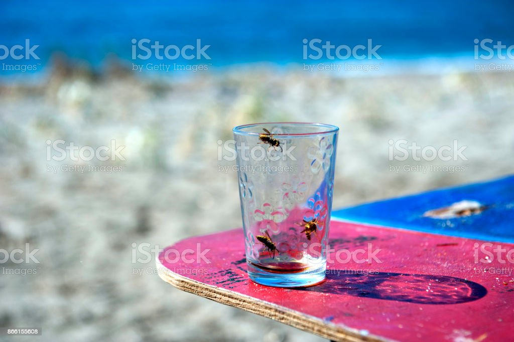 Wasp in the glass on the beach stock photo