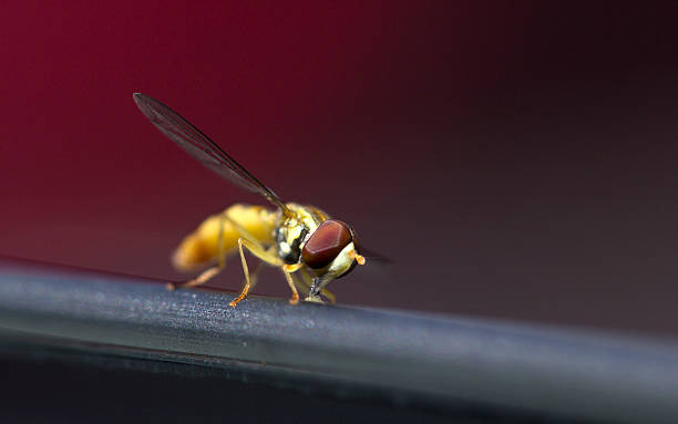 Wasp Macro Wasp Macro.  Do zoom at wasp and you can see the detail. alas stock pictures, royalty-free photos & images