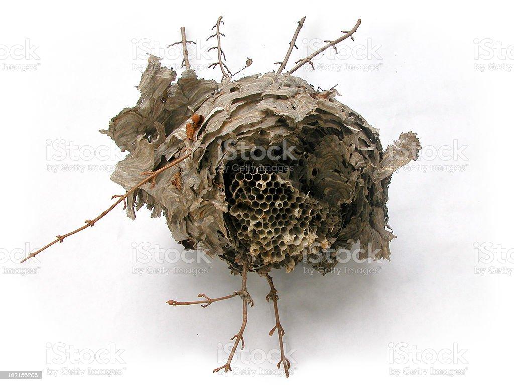 wasp nest, globular royalty-free stock photo