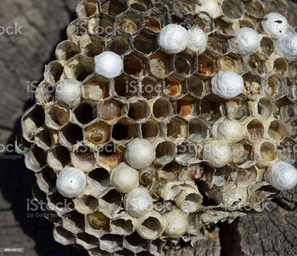Wasp nest lying on a tree stump. stock photo