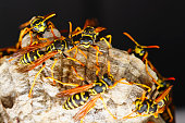 A macro of a small nest of wasp.