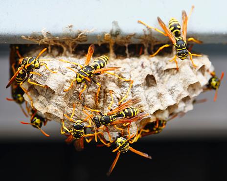istock Wasp Nest Macro 1164595084