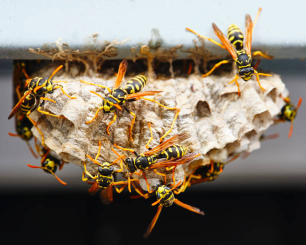 Wasp Nest Macro stock photo