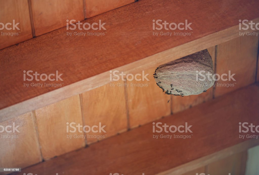 Wasp nest with copy space stock photo