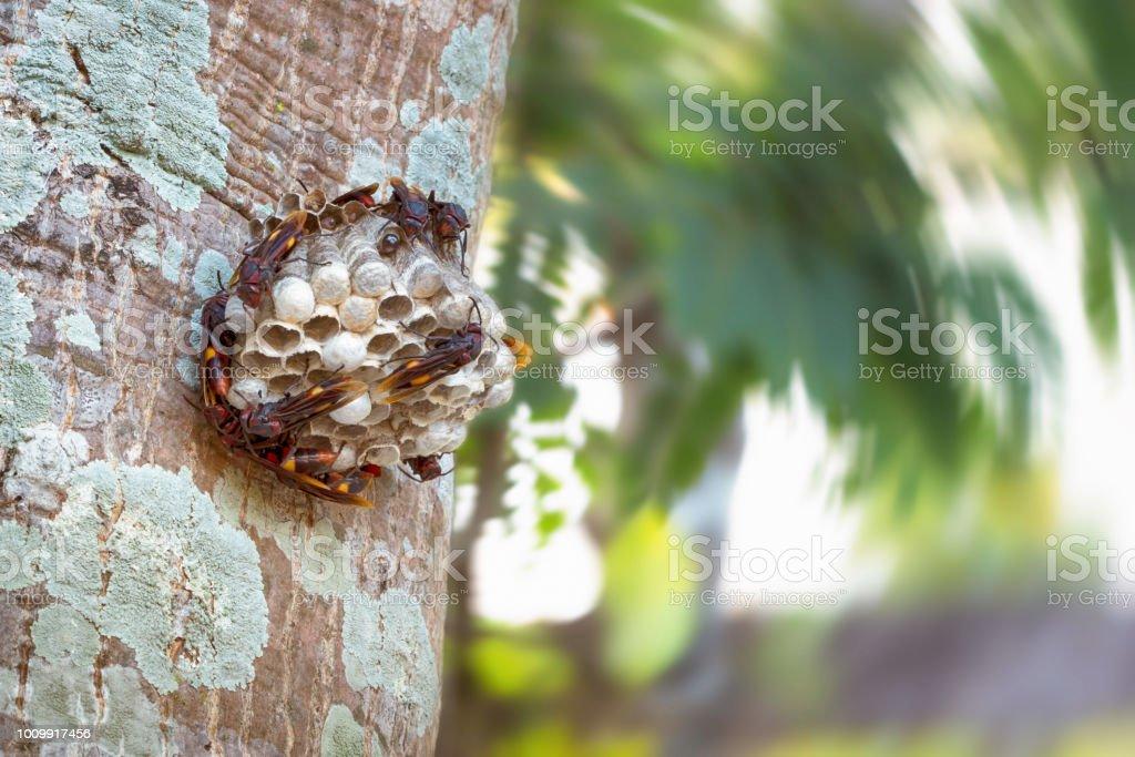 Avispa con avispas en el árbol. - foto de stock