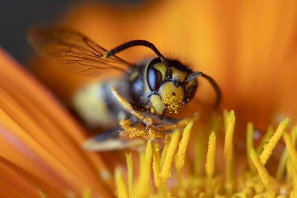 Wasp on a Flower stock photo