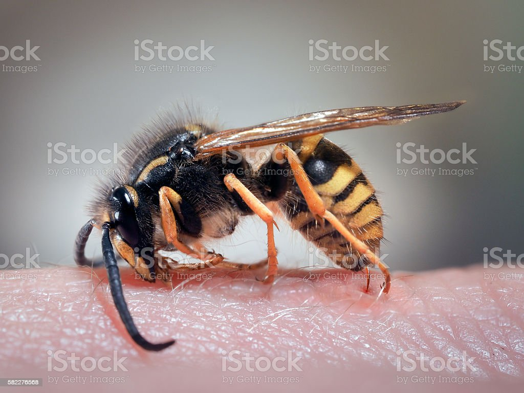 Wasp on a human hand - foto de stock