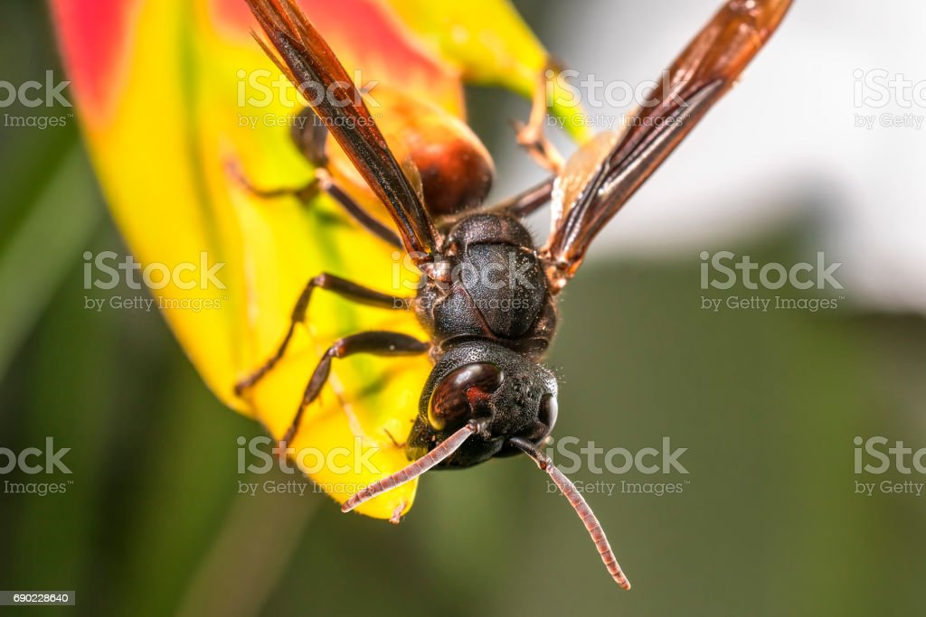 A wasp on a yellow flower – Foto