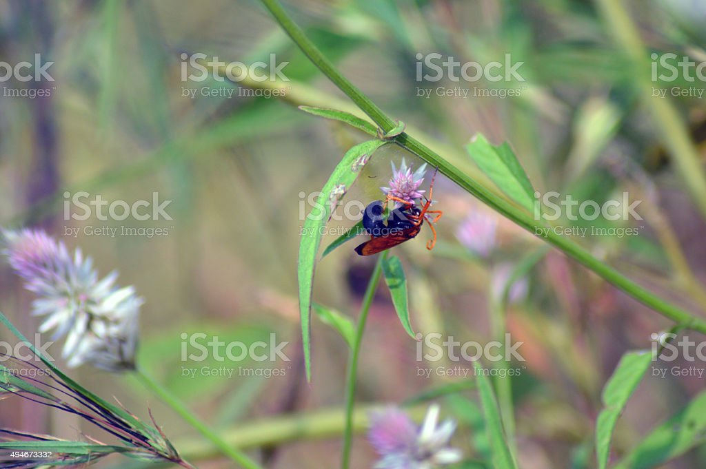 Wasp on flower stock photo