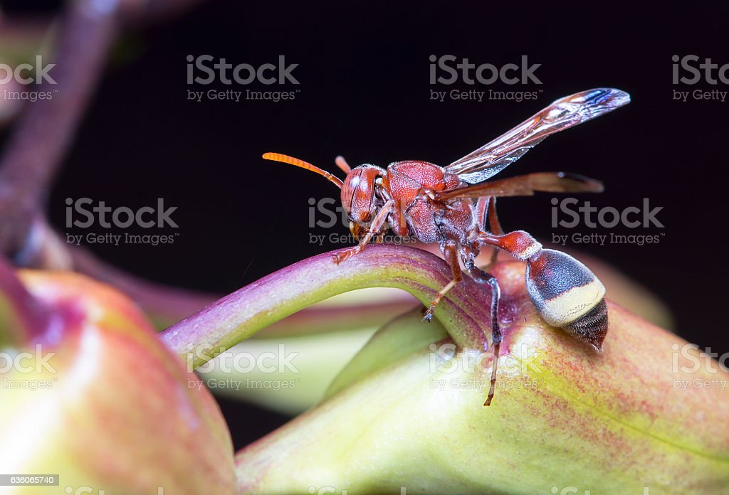 Wasp on orchid - foto de stock