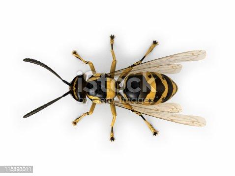 Wasp on white background