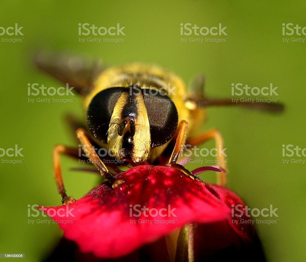 Wasp Stock Photo - Download Im...
