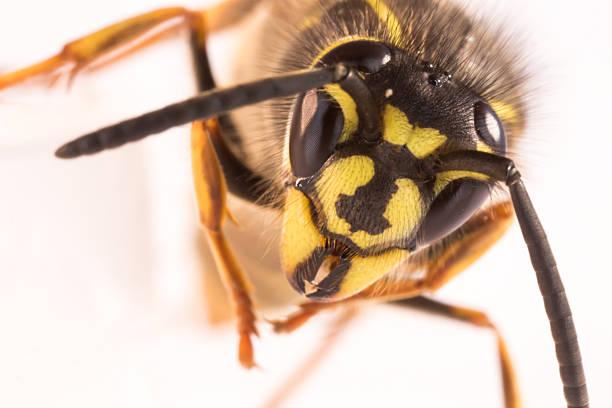 vespa - vespa comum - fotografias e filmes do acervo