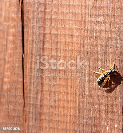 istock wasp 687901828