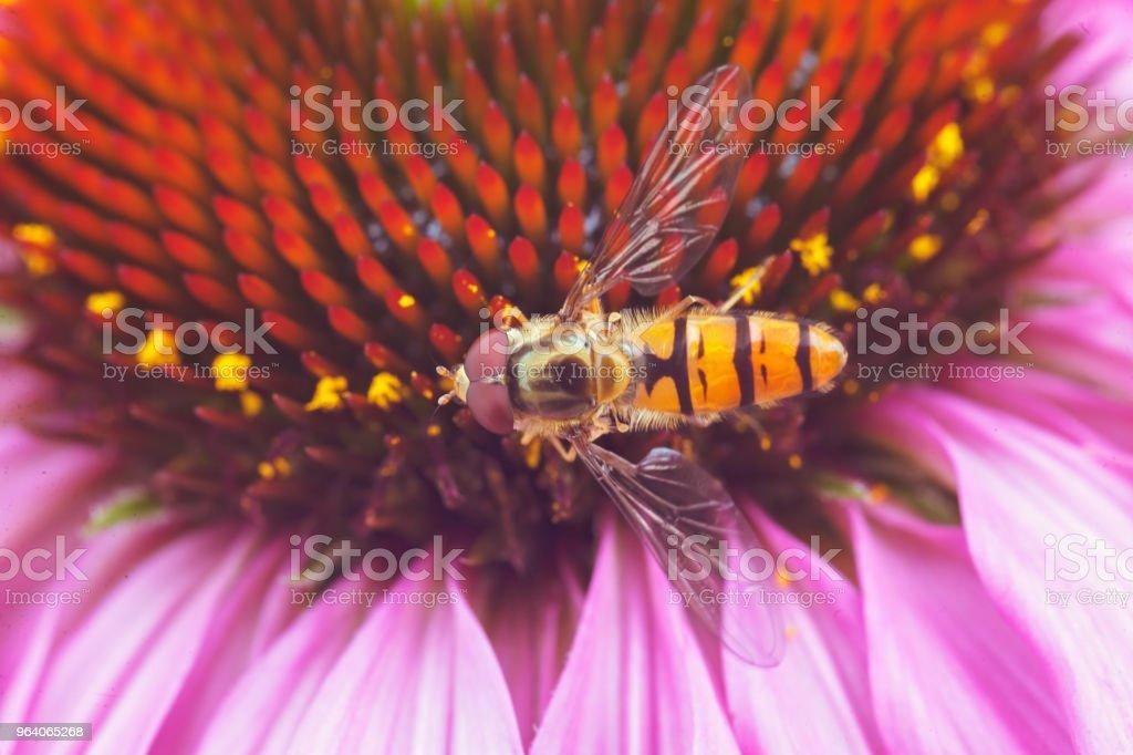 wasp - スズメバチの巣のロイヤリティフリーストックフォト