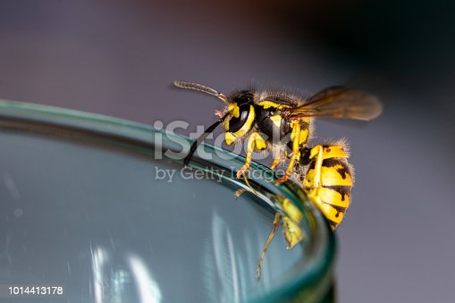 istock Wasp sitting on a glass  - danger of swallowing a wasp in the summer 1014413178
