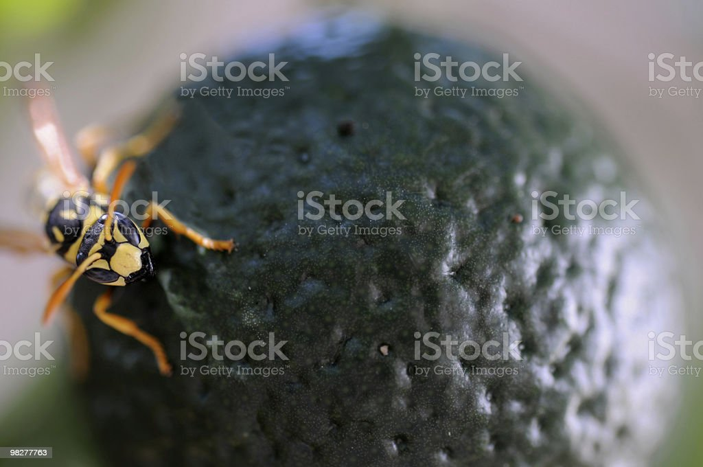 wasp sitting on orange fruit royalty-free stock photo