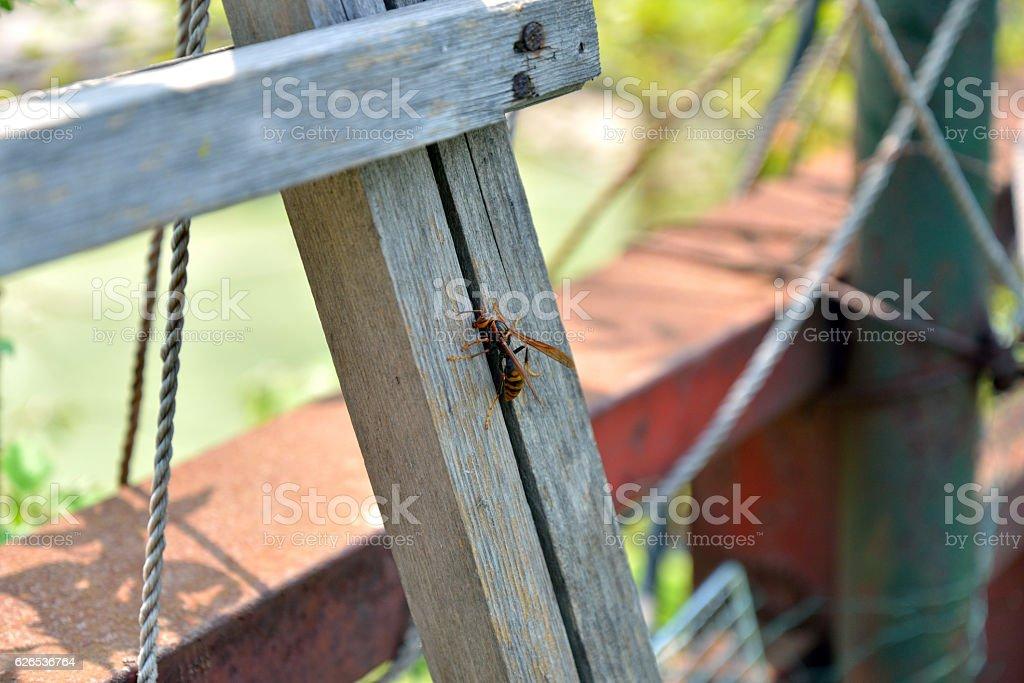 Wasp Sitting on Wood stock photo