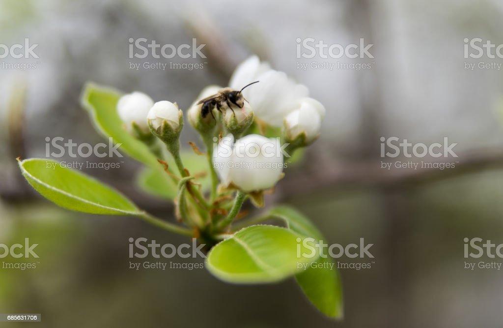 睡在一朵花上的黃蜂 免版稅 stock photo